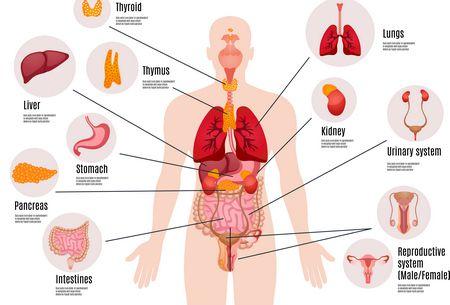 أغرب الحقائق عن جسم الإنسان: تعرفوا عليها