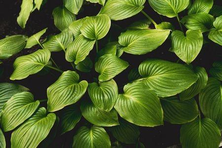 أفضل أنواع نباتات الظل