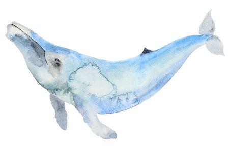 معلومات عن الحوت الأزرق مفيدة