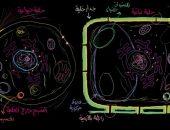 الخلية النباتية والحيوانية