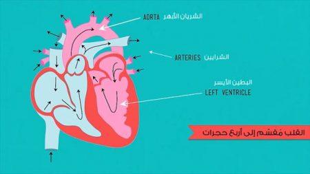 حجرات القلب