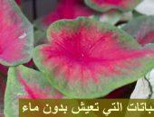 أنواع النباتات