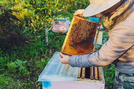جهاز سمارت بي لحماية خلايا النحل