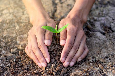 زراعة الأشجار
