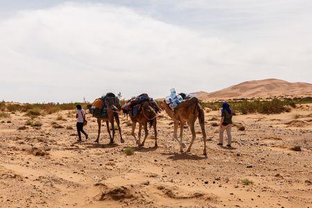معلومات عن واحة سيوة - جمهورية مصر العربية
