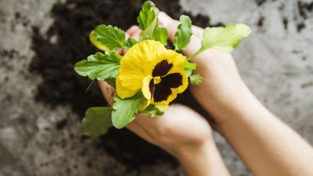 صور زهرة الثالوث