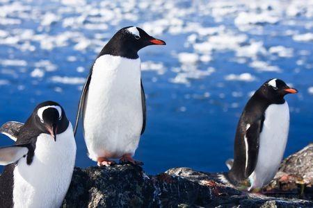 معلومات عن البطريق رائعة وباللغة العربية