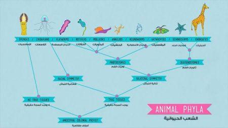 نمو وتطور الحيوانات