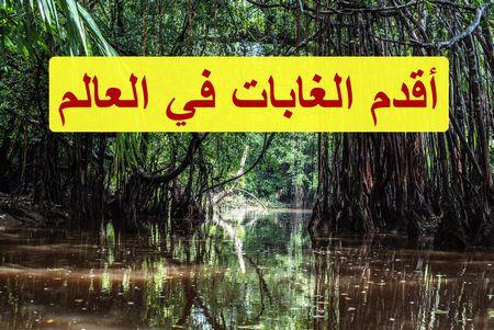 أقدم الغابات