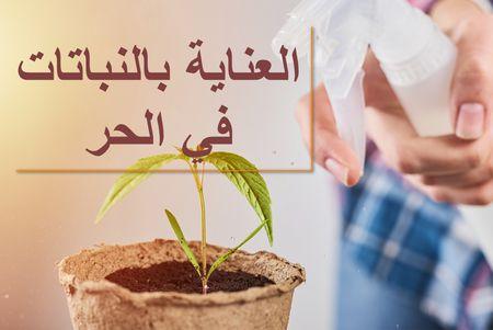 العناية بالنباتات