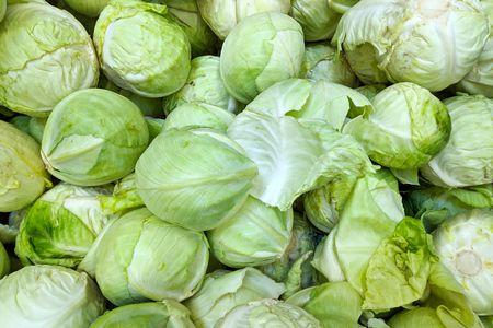 معلومات عن زراعة الكابوتشي Cabbage