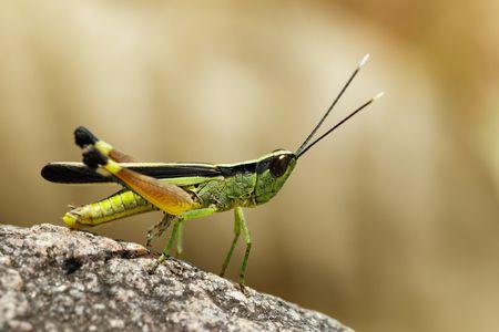 صورة حشرة , انقراض الحشرات