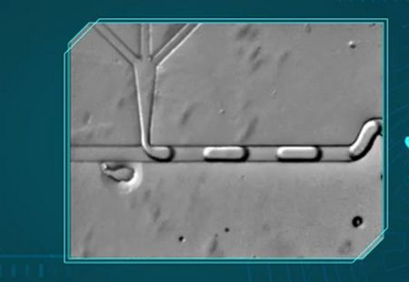 علم الموائع الدقيقة، Microfluidics