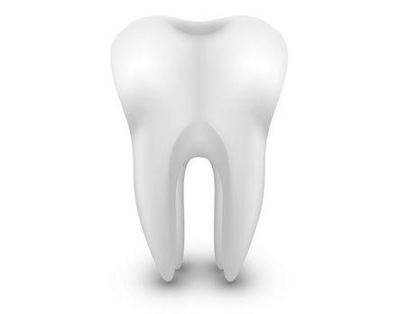 3D teeth ، الأسنان ، ثلاثية الأبعاد