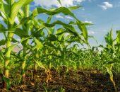 صورة , الزراعة , المحاصيل الزراعية , البيئة