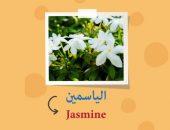 كلمات عربية , مصطلحات عربية , اللغة الإنجليزية