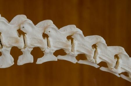 عظام،صورة