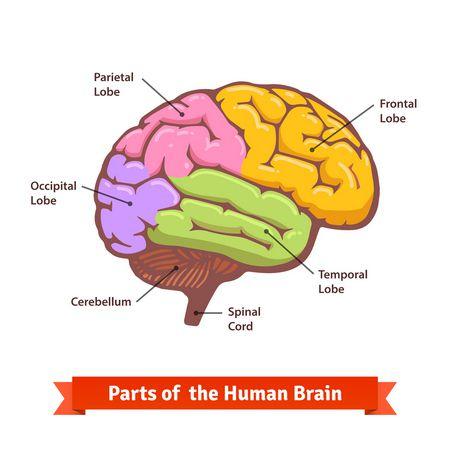 صورة , الدماغ , مرض الصرع , التشنجات