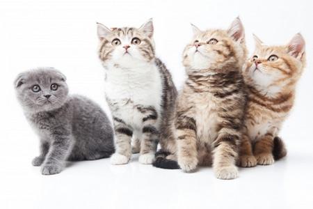 حيوانات أليفة،صورة،قط،قطة،قطط،Pets
