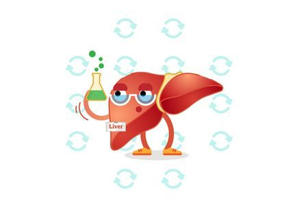 Liver ، صورة ، فحص الكبد