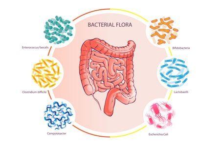 صورة , القولون , بكتيريا القولون , الأمعاء