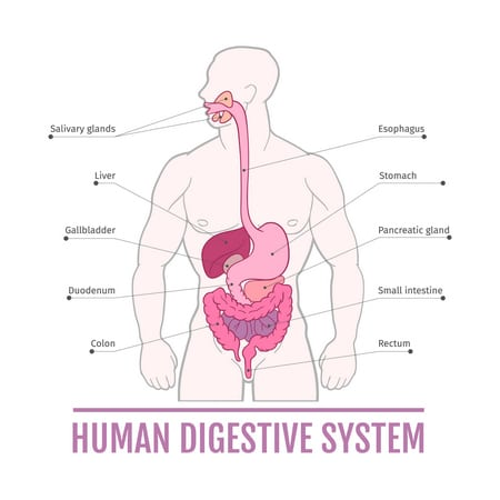 صورة , القولون , الإصابة بسرطان القولون , الجهاز الهضمي
