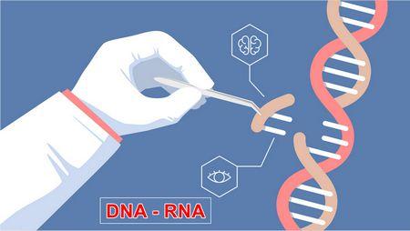 الحمض النووي , DNA , RNA