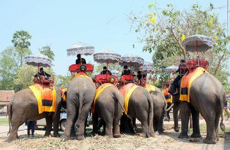 Elephant ,Sri Lanka, الأفيال ، سريلانكا ، صورة