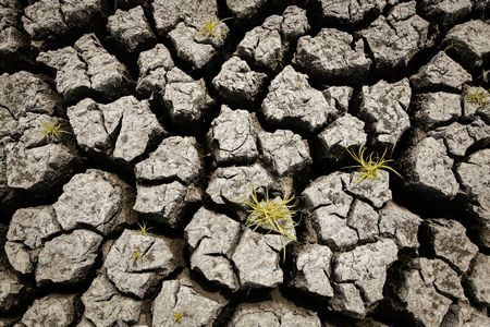 صورة , الجفاف , البيئة , الأرض , المشاكل البيئية