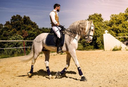 صورة , رجل , تدريب الخيول , الفروسية
