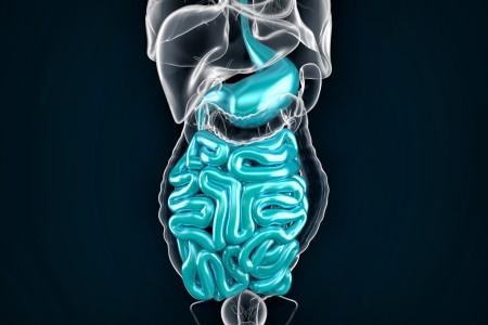الارتداد المريئي ، حموضة المعدة ، الجهاز الهضمي ، عضلة المريء ، قرحة المعدة