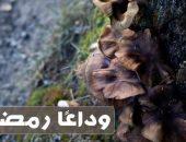 صور وداع شهر رمضان , وداعًا رمضان ,
