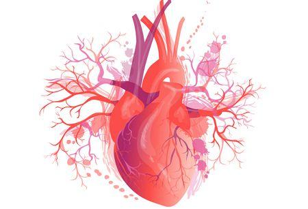 صورة , قلب , أمراض القلب , القلب اليميني