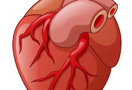 صورة , الجلطة القلبية , القلب