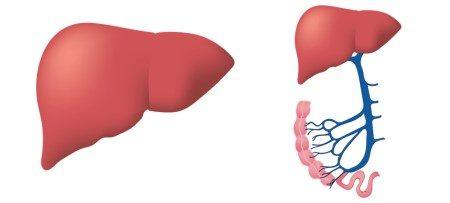 التهاب الكبد الوبائي ، فيروس أ ، فيروس بي ، فيروس سي ، اعتلالات الكبد