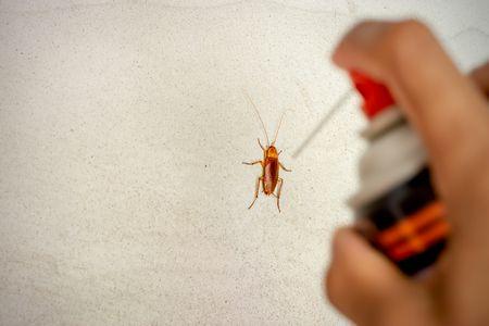 صورة , حشرات المنزل , الصراصير