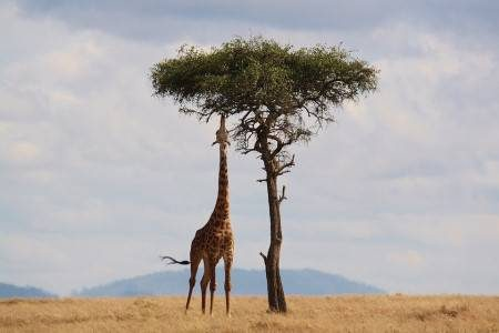 كينيا ، نيروبي ، مومباسا ، ماسي مارا ، جزيرة لامو