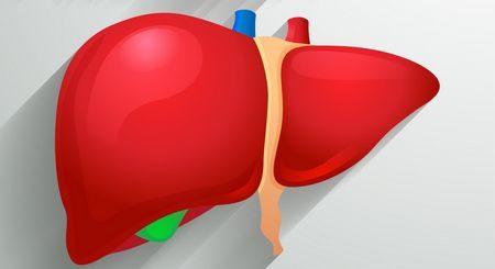 صورة , مرضى الكبد , الكبد