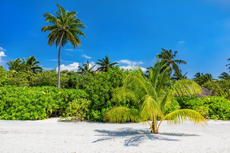 صورة , جزر المالديف , منتجعات المالديف