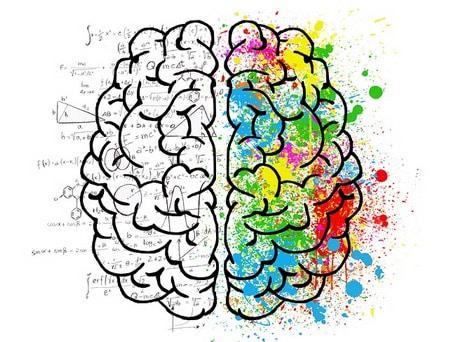 العقل،المخ،الذهن،الدماغ