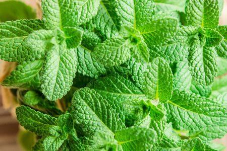 صورة , نعناع , علاج الإكتئاب , نباتات طبيعية