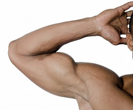عضلات،صورة،عضلة،ذراع