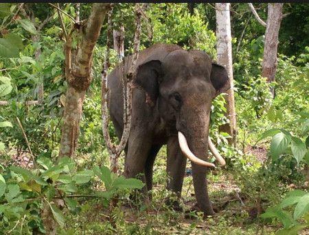 صورة , الوجهات السياحية البرية , محمية طبيعية , فيل