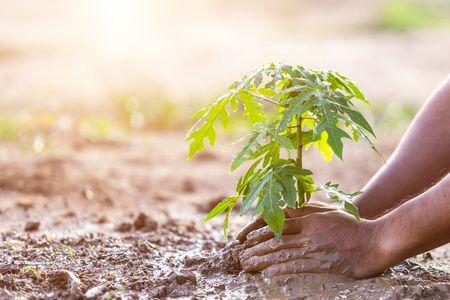 بداية جديدة , العام الجديد , نبات , صورة