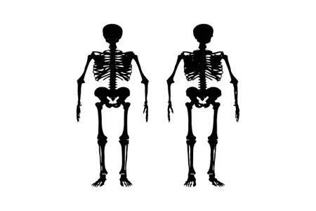 هشاشة العظام ، العمود الفقري ، الغدة الدرقية ، الكالسيوم ، فيتامين د ، الفيتامينات