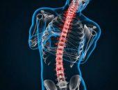 هشاشة العظام ، فيتامين د ، مضادات الأكسدة ، الأدوية ، كثافة العظام ، البقدونس ، الكالسيوم