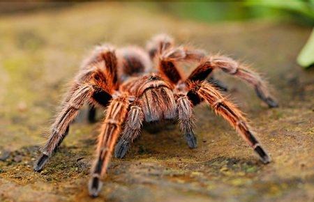 عنكبوت، عناكب، Phobia ، أنواع الفوبيا
