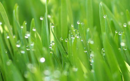 صورة , نبات , مادة الكلوروفيل