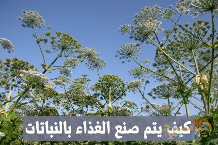 كيف يتم صنع الغذاء بالنباتات , صورة