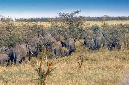 الحديقة الوطنية سيرينجيتي ، جبل كليمنجارو ، المعالم السياحية ، الحيوانات النادرة ، تنزانيا